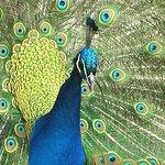 Wingham Wildlife Park Photo