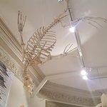 Museo Provincial de Ciencias Naturales y Oceanográfico