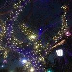 Lighted tree at Mi Pueblo