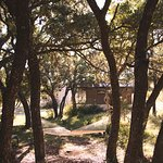 Relax in a hammock under the Live Oaks