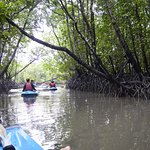 kayaking though the inner forests
