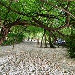Biyadhoo Island Resort Foto