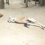 Foto de Currumbin Wildlife Sanctuary