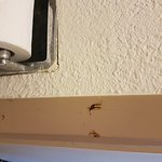 Foto de Quality Inn Elkton - St. Augustine South