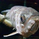 Phuket Aquarium Foto