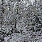 Naturresort Schindelbruch Foto