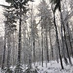 winter wonderland in the surrounding forests. the woods are just outside the resort - great for