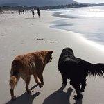 Happy pups strolling along the Carmel City Beach