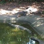 Photo de Crocodile Adventureland