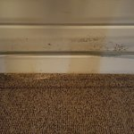 Mouldy wall and stained carpet