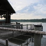 Ferry Dock from Wilderness Lodge