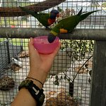 The lorikeets have a sweet tooth!