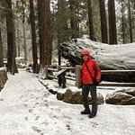 The Trail to General Sherman