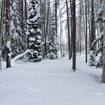 View in back country while cross country skiing.