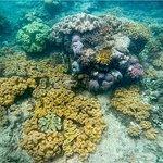 Foto di Ocean Free and Ocean Freedom