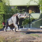 Wooly mammoth approaching the tar pits. What a smell!