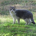 One of the stray cats we saw.