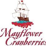 Mayflower Cranberries