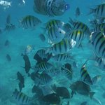 Fish Frenzy while snorkelling right off the beach.
