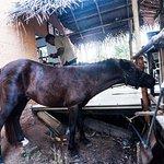 Horse :D