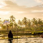 Infinity pool with ricefield view