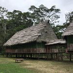 Amazonia Garden of Light Photo