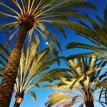 Melia Jardines del Teide Foto