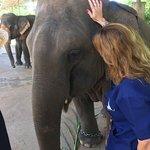 Baanchang Elephant Park - Private Day Tours Foto