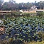 Everglades Safari Park Foto