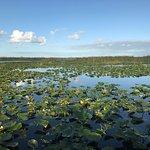 Blue Cypress Lake Waterlilies Stumpknockers Tour