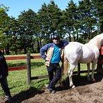 Horse trek horses