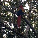 Macaw at Gaia