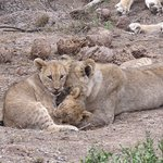 Foto Shamwari Game Reserve Lodges