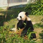 Macau Giant Panda Pavilion Bild