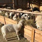 La fattoria:)