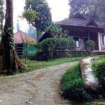 Vernacular Cottage