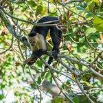 Bosque del Cabo Rainforest Lodge Foto