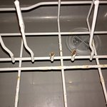 Just a few of the broken prongs in dishwasher