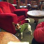 The Dog House Blues Tea Room