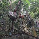 Photo of Gibbon Rehabilitation Project