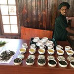 Ausflug Green Tea Factory