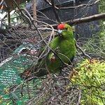 Kiwi Birdlife Park Foto