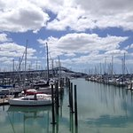 Westhaven Marina with Auckland Harbour Bridge in the background