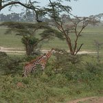 Photo of Africa Unike Adventures and Safaris - Day Tours