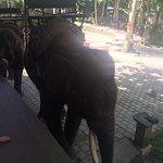 Foto de Bali Elephant Tour