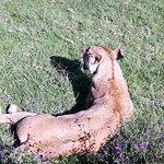 Foto de Ngorongoro Rhino Lodge