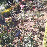 Picture taken at rose garden in ooty.