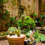 Mucha paz en el patio de Tesorito