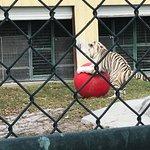 Big Cat Habitat and Gulf Coast Sanctuary Foto