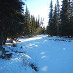 A frozen-over creek